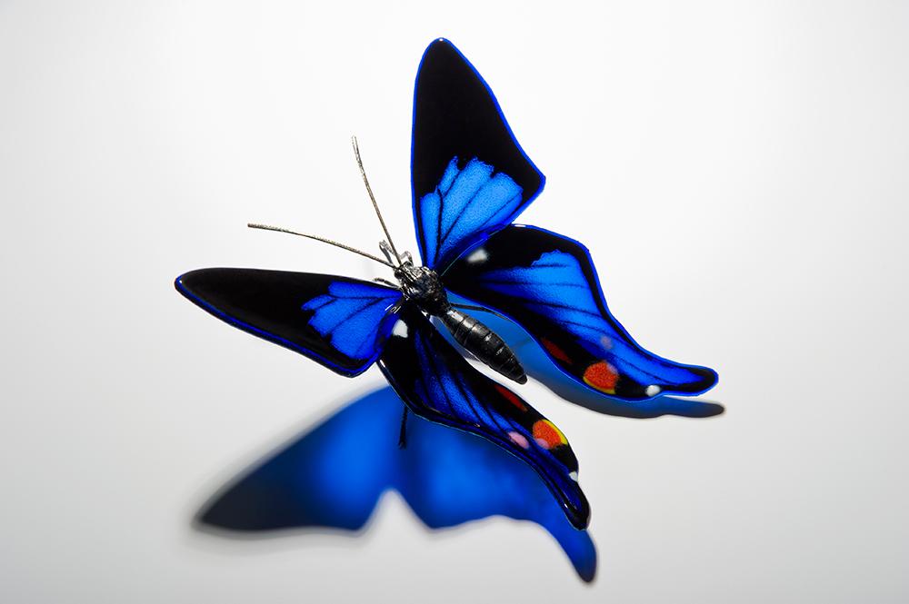 Wall Art Glass Butterflies : Art glass butterfly blue periander metalmark by laura hart